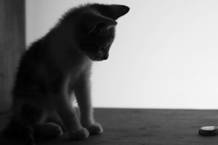 Check This Out Cat Kitty Beautiful Blackandwhite Love Kitten Cute Black & White Cutness Portrait Furry Friends Adorable Kitty Cat Kittens Kitty Love Cute Cats Furry Animals Pets Animal Pet Photography Curiosity