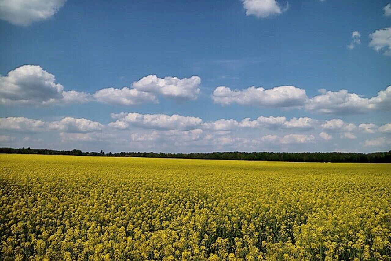 Augenweide 💫🌼💫💕 Nature Nature Photography Naturelovers Rapsfeld Rapsfeldshooting RapeFlowers Rapeseed Field Nature_collection Field Yellow Flower Germany🇩🇪
