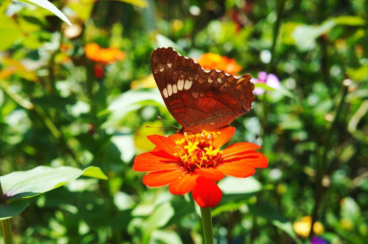 Flower Butterfly - Insect Fragility Beauty In Nature Nature Close-up Plant Insect One Animal No People Outdoors Freshness Day Animal Themes