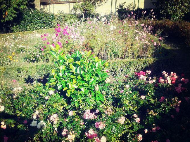 Taking Photos Garden Photography Flowers Lisieux