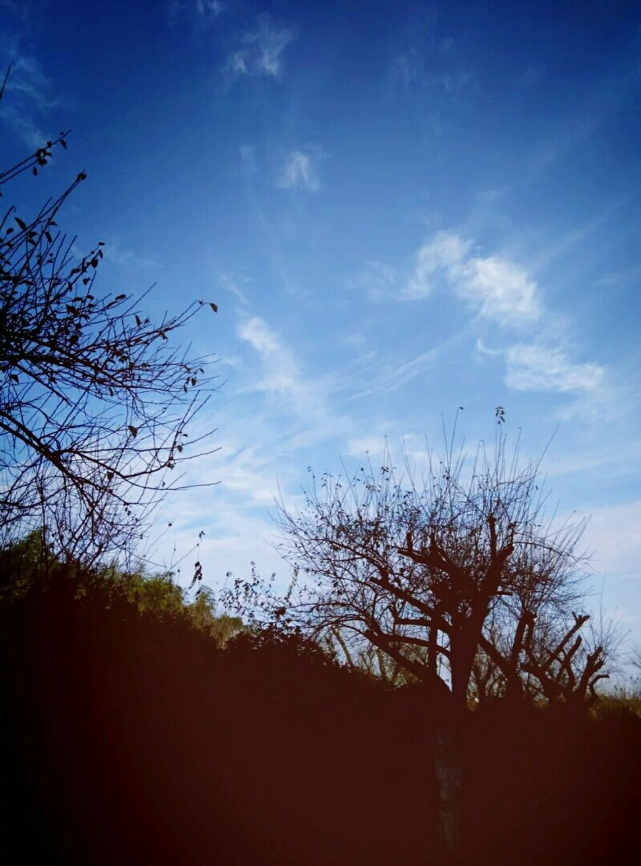 Trees Stay Sky Good Times Enjoy Life Relax Travel Old Town On The Road Relaxing China EyeEm China Free Time Taking Photos Village Life Country Nature Well  Life Good Wether Beautiful Day PhonePhotography IPhoneography