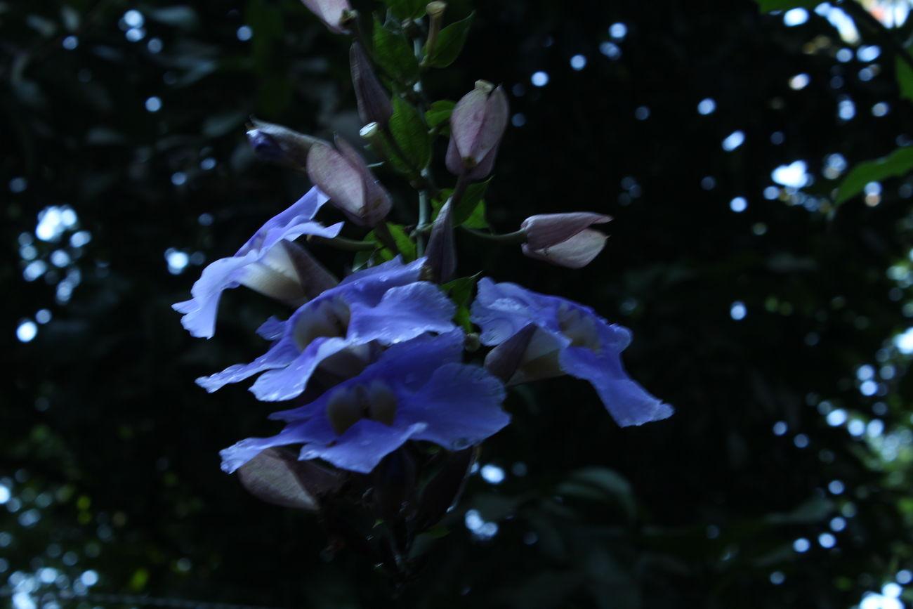 Night Flowers Flower Purple Purple Flower Natureza Natural Bellezanatural Belleza Detalle Hermosas Belleza Natural Purple ♥ Day Purpple Color Purple Naturaleza🌾🌿 Flores Pequeñas Bellezas