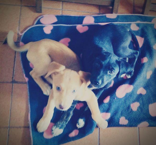 Puppies Puppy Ilovemypuppy Dog❤ Mydogsarecoolerthanyourkids