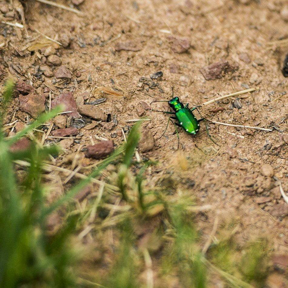 It looked really cool, so I took a picture. Nature Greenbug Cool Ztprod