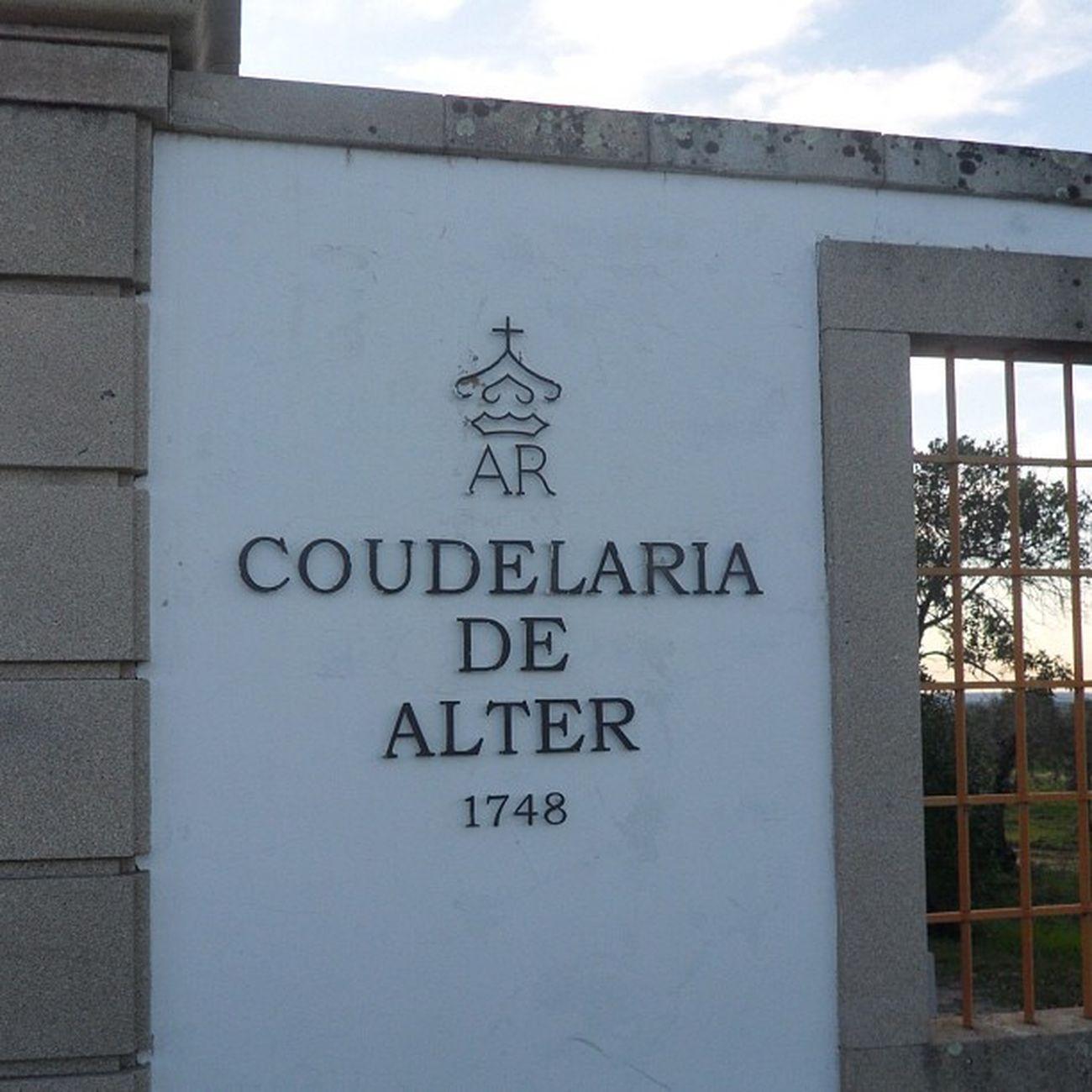 Coudelaria Real Igers Alentejo Igersportugal Alterreal Alterdochao Coudelariadealter