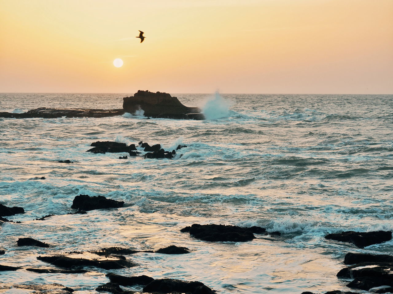 Sunset Sea Beach Bird Horizon Over Water Nature Animal Wildlife Silhouette Flying Water Horizon Sky Animal Outdoors Dramatic Sky Wave Beauty In Nature Animal Themes No People Beach Sunset Seagull SEAGULL IN FLIGHT Seagulls And Sea Travel Destinations Morocco
