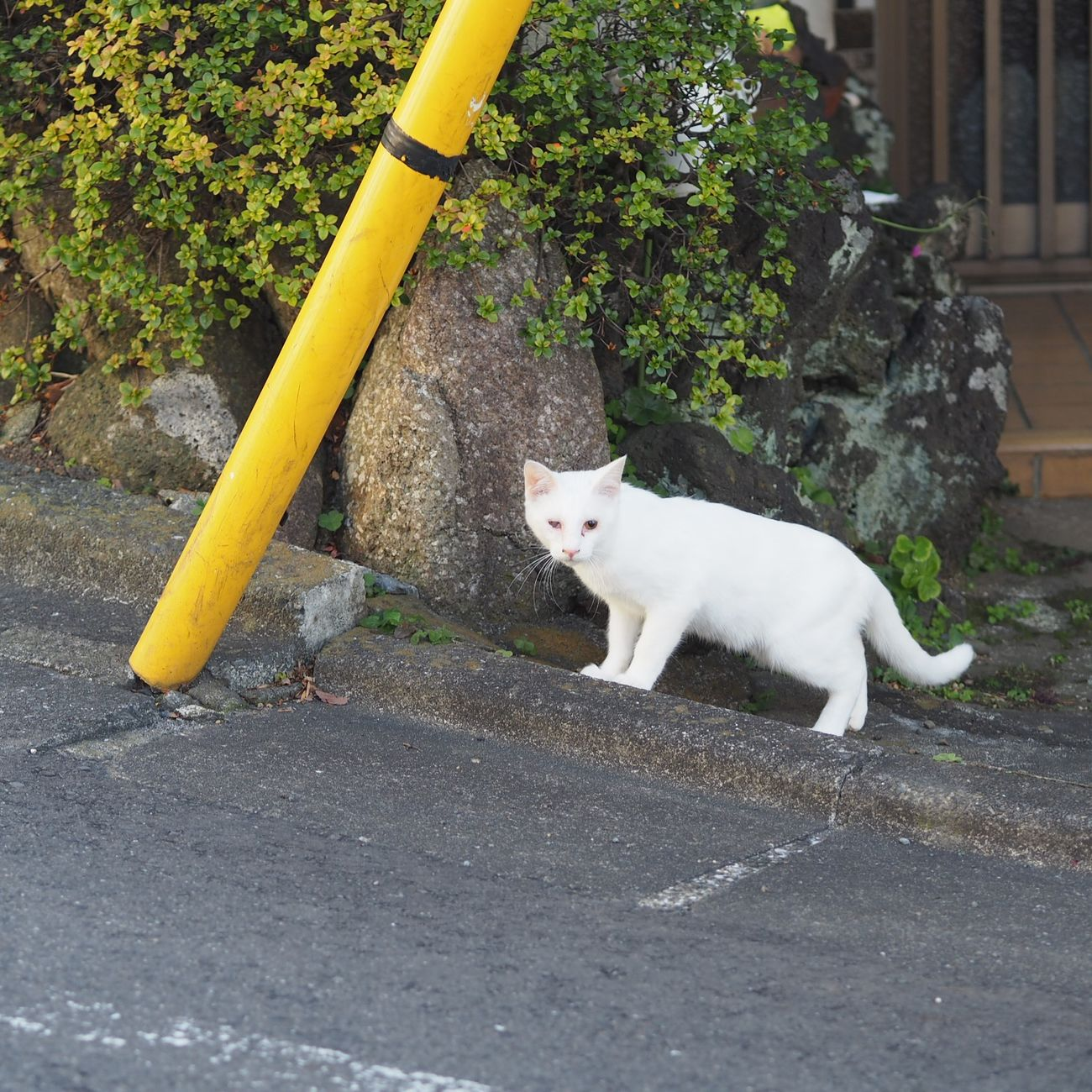 One Animal No People Domestic Cat New Years Day Happy New Year Stray Cat Streetphotography Injured Cats Of EyeEm Cat White Cat