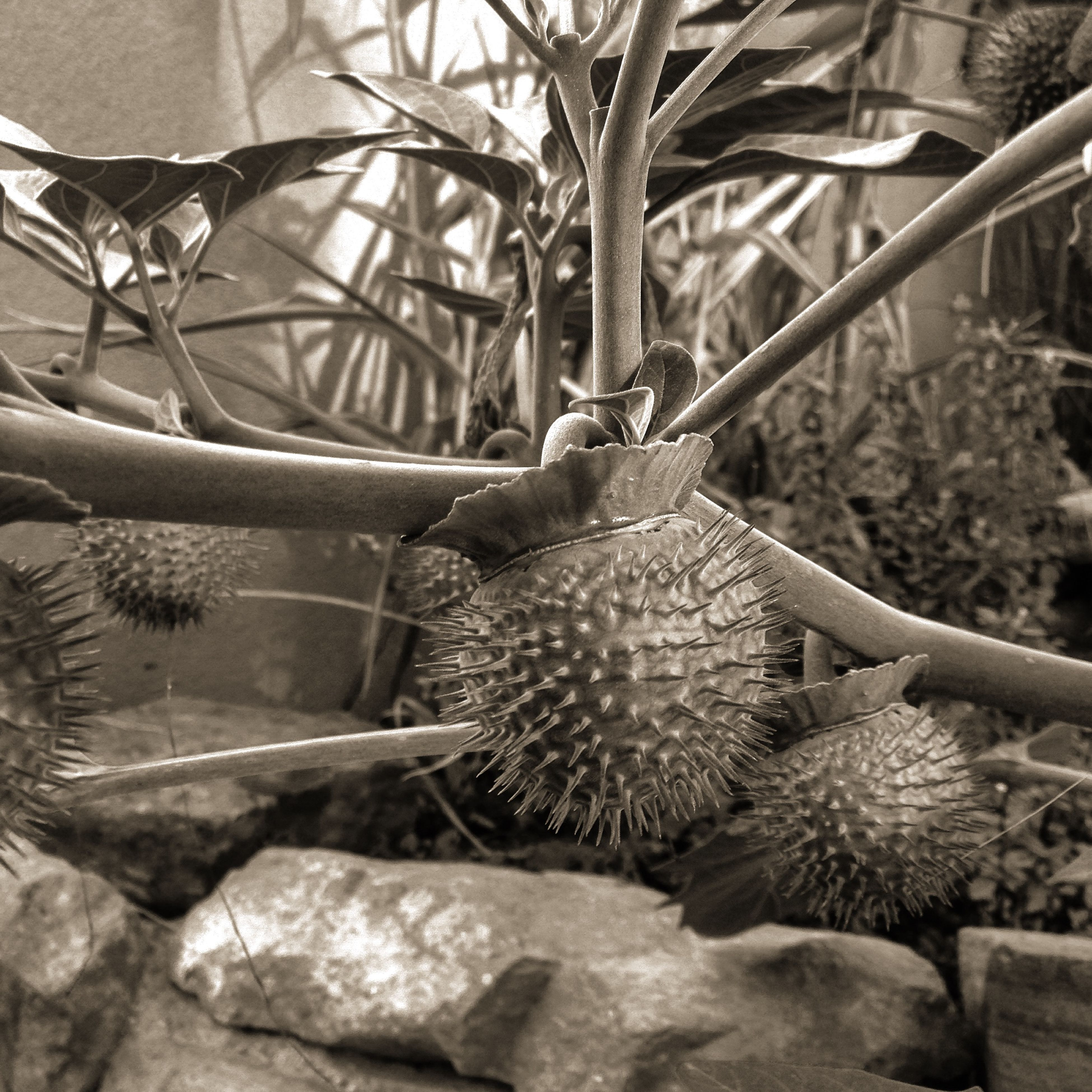 close-up, day, no people, plant, sunlight, outdoors, high angle view, nature, metal, potted plant, focus on foreground, freshness, still life, basket, flower, cactus, stone - object, animal themes, growth