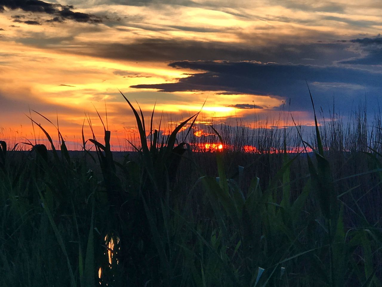The Great Outdoors - 2017 EyeEm Awards Sunset Growth Nature Beauty In Nature Sky Plant Outdoors Scenics Cloud - Sky Tranquil Scene Tranquility No People Grass Day