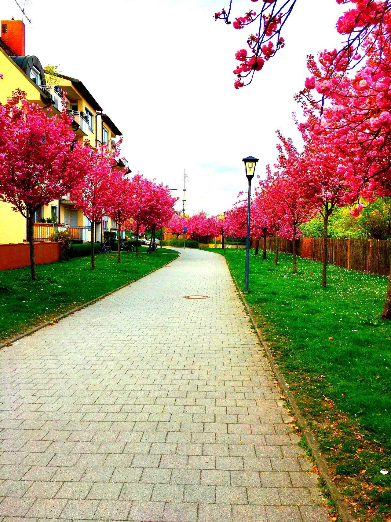 Daylight Filter Munich Leopoldstrasse Home After Work