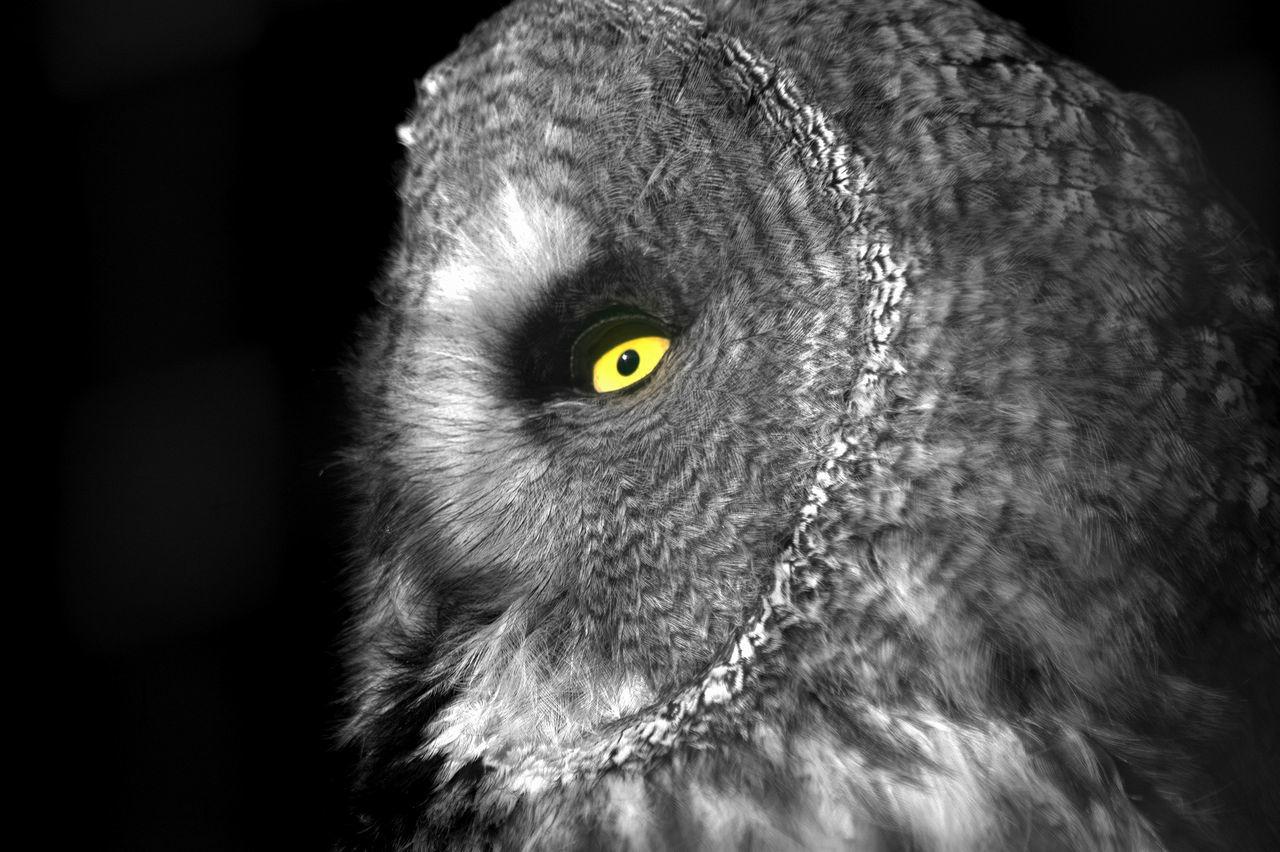 Beautiful stock photos of owl, Animal Body Part, Animal Themes, Bird, Bird Eye
