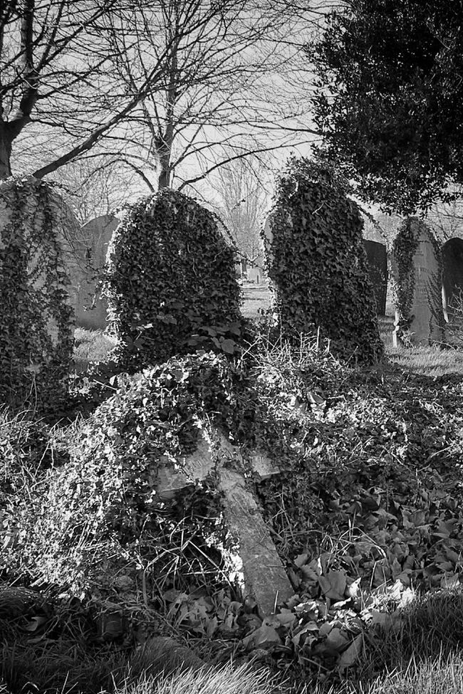 Blancoynegro Cemetery Graveyard Beauty Black&white Monochrome Photography My Unique Style Darkart Dark Photography Bw_collection