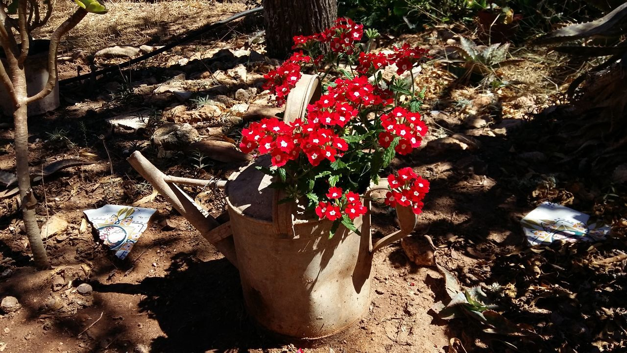 Flowers flower pot Garden Photography Red Flowers Nice Garden Flower Pot Red Color Delicate Flowers Colorful Shadows & Lights Summer Colors Metal Pot Mediterranean  Mallorca Beautifully Organized Art Is Everywhere Live For The Story