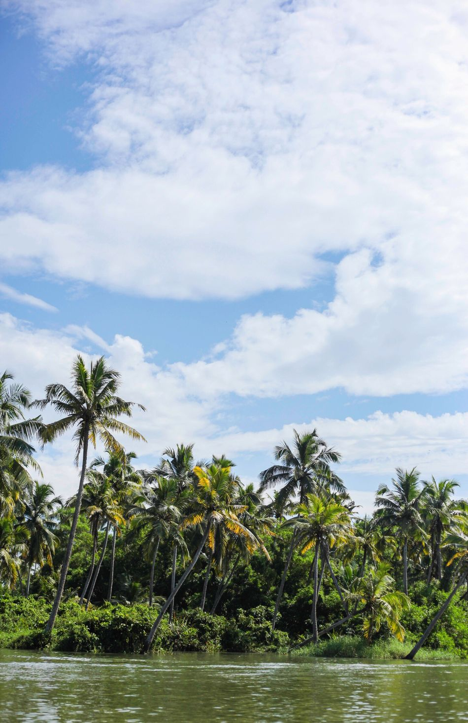 Greenery Coconut Trees Nature Poovar Kerala India Travel Wanderlust Check This Out