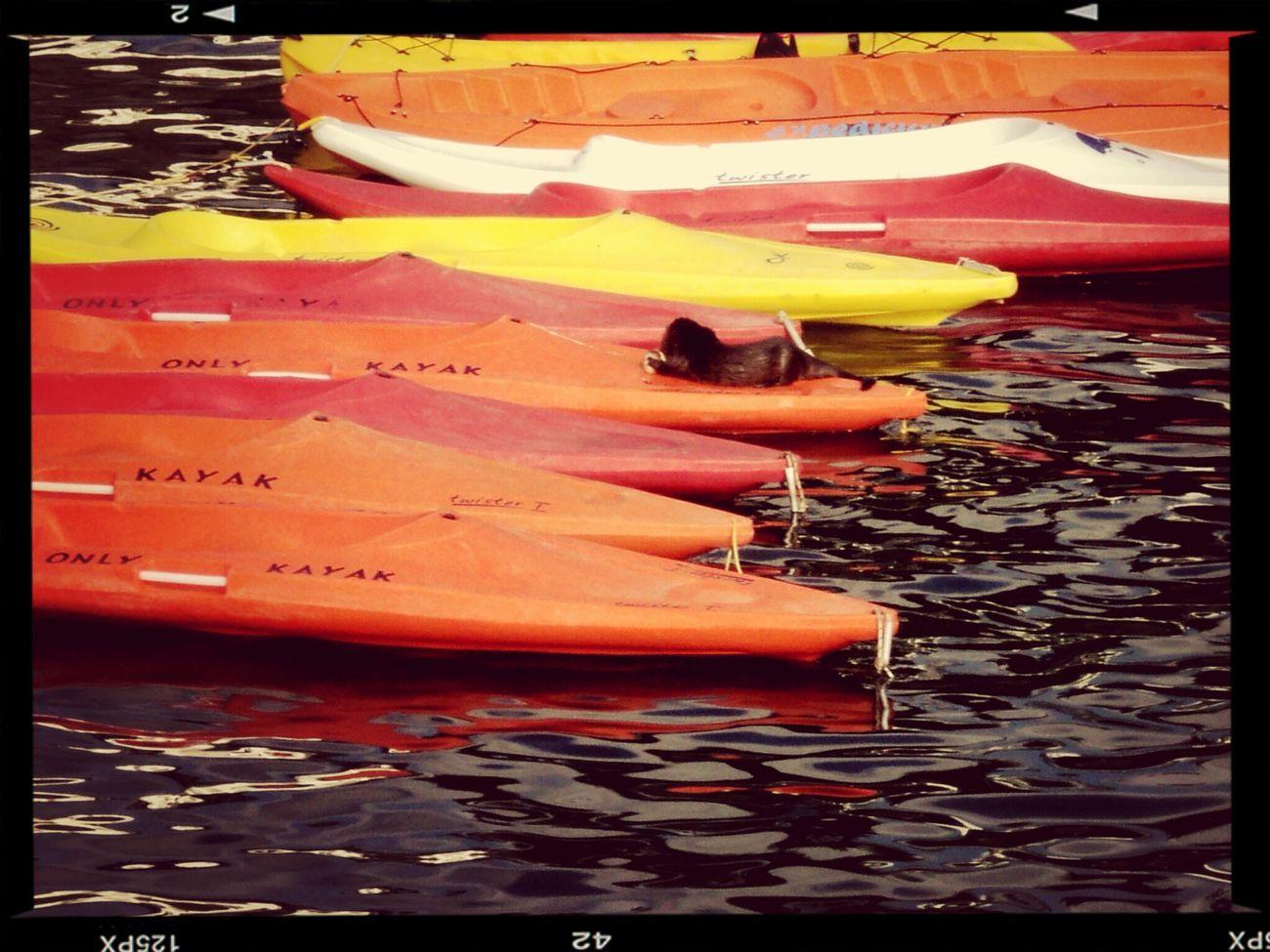 Un chungungo comiendo sobre Summer2014 Summerismagic Los kayak ?