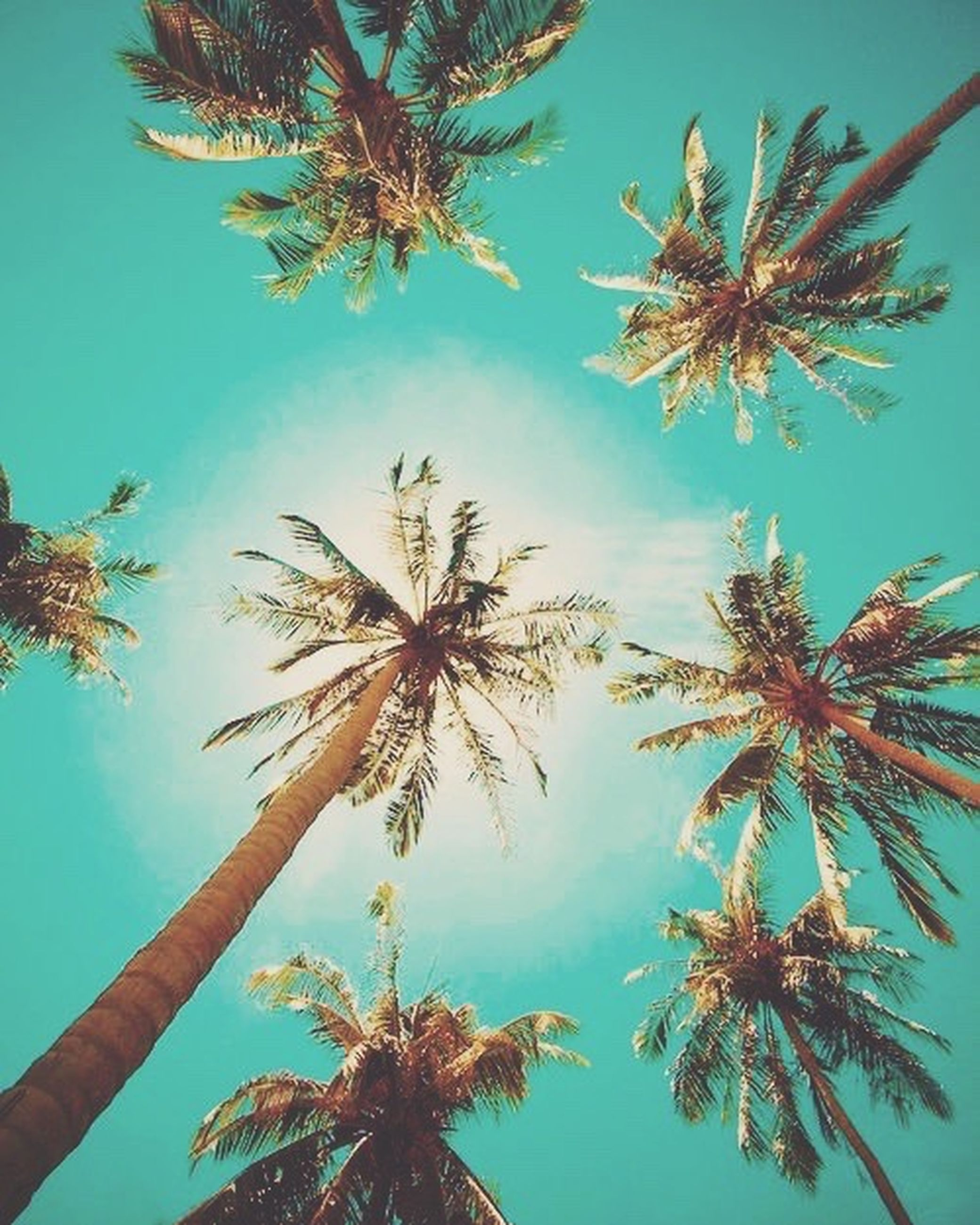 low angle view, tree, palm tree, growth, blue, sky, branch, nature, tree trunk, beauty in nature, tranquility, clear sky, day, coconut palm tree, no people, outdoors, scenics, palm leaf, leaf, sunlight
