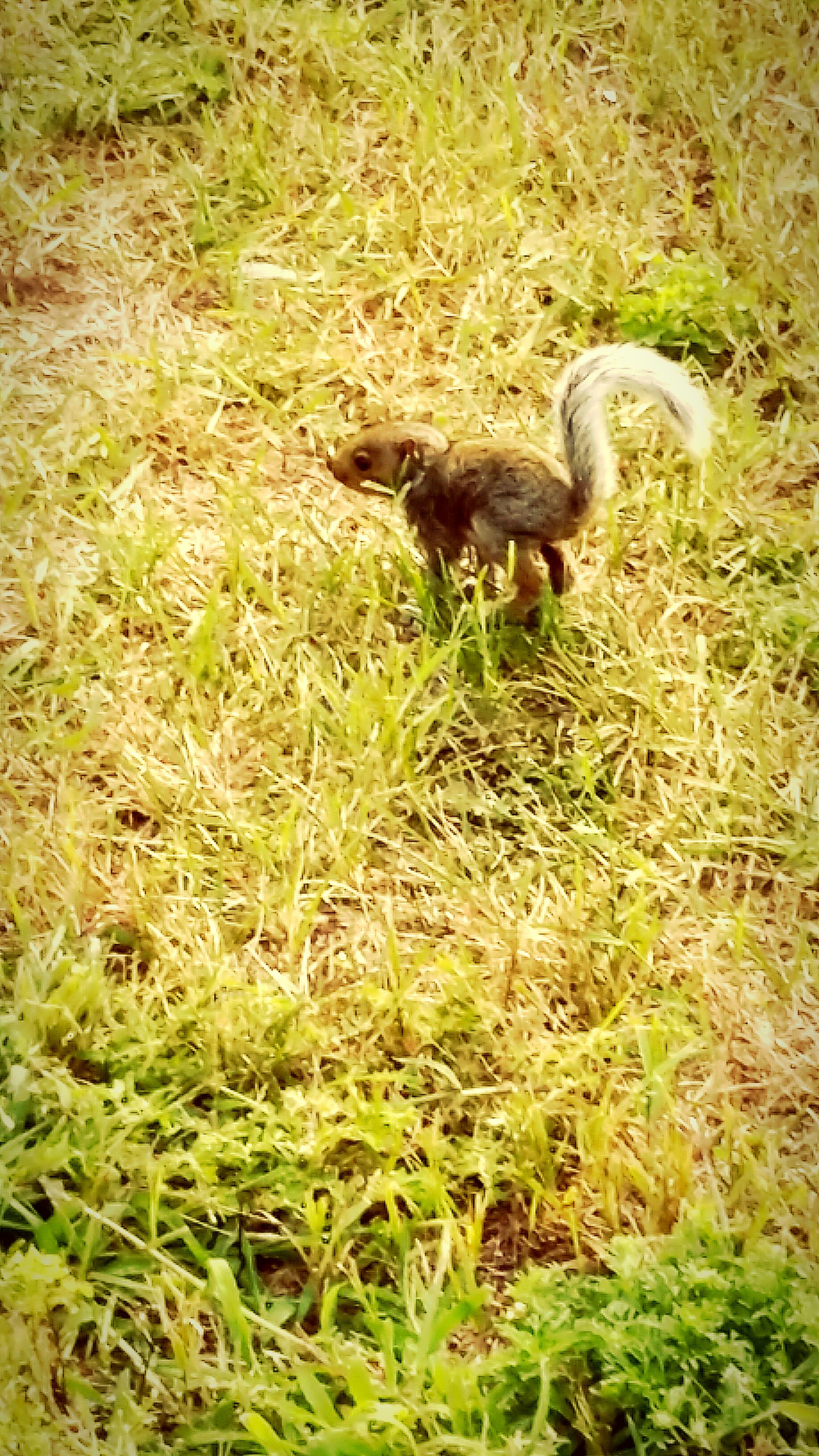 Baby Squirrel Say Cheese=)