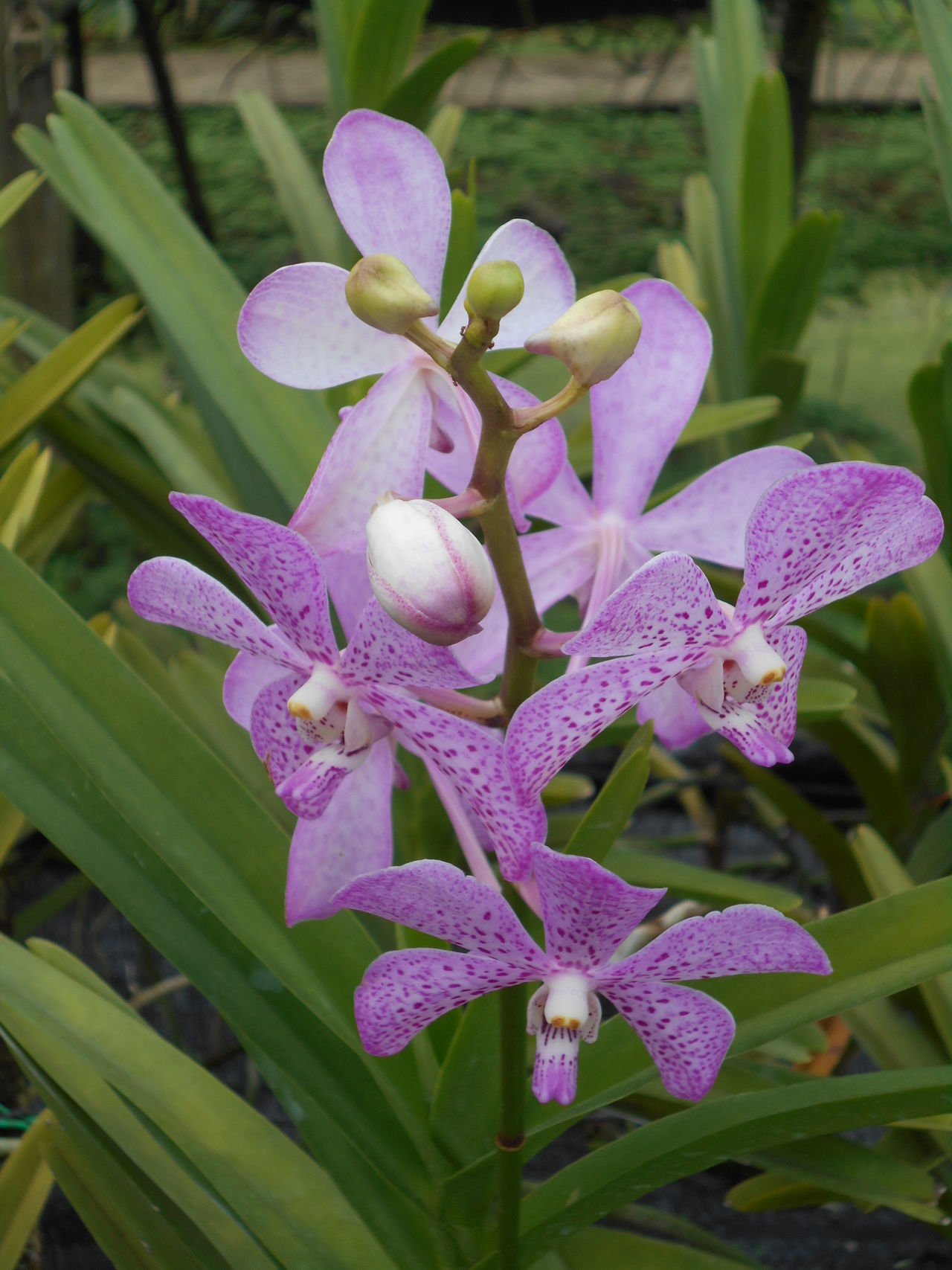 Flower Orchid Orchids Orchid Flower Tropic Flower