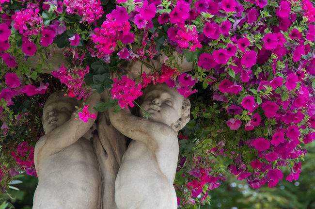 Beauty In Nature Cherubs Flower Fragility France French Freshness Jardin Du Luxembourg Nature Outdoors Paris Petal Pink Color Pink Flower Sculpture Stone V