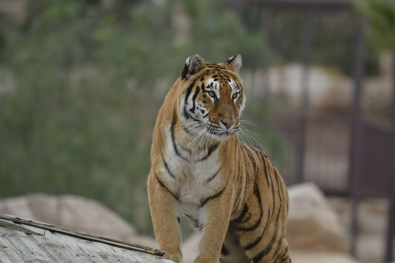 Beautiful stock photos of kunst, Animal Themes, Animal Wildlife, Animals In The Wild, Benidorm
