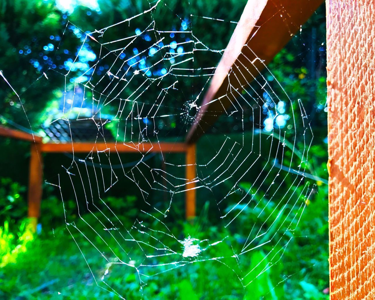 Spider Web Web Spider Focus On Foreground Close-up Day Fragility Outdoors No People Nature Complexity Animal Themes in Germany