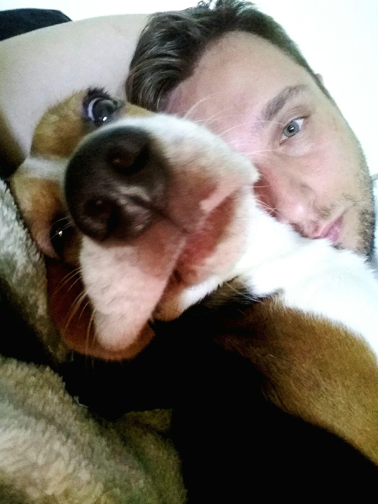 Ori lazy Looking At Camera Portrait Front View Indoors  Dog❤ Beagle Beaglelove Youandme Dog Life Puppy World Sky Origins Looking At Camera Beaglelife Beaglestagram One Animal Worldwide Beaglemania Nature
