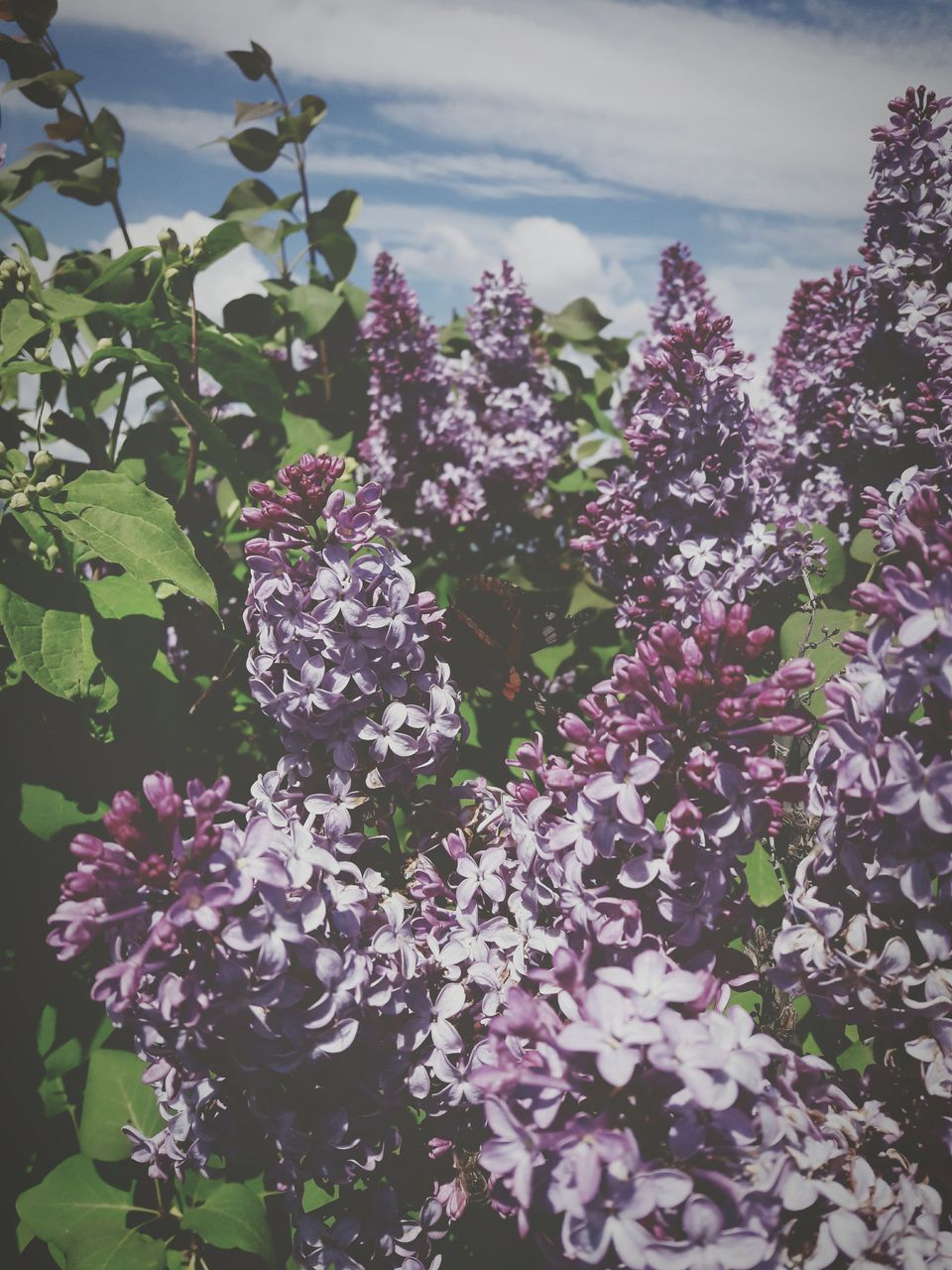 nature, flower, beauty in nature, no people, outdoors, growth, day, plant, tranquility, freshness, fragility, scenics, water, close-up, lilac, tree, sky, flower head