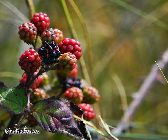 I'm your huckleberry. ~ Taking Photos Nature_collection Streamzoofamily Roadside Beauty