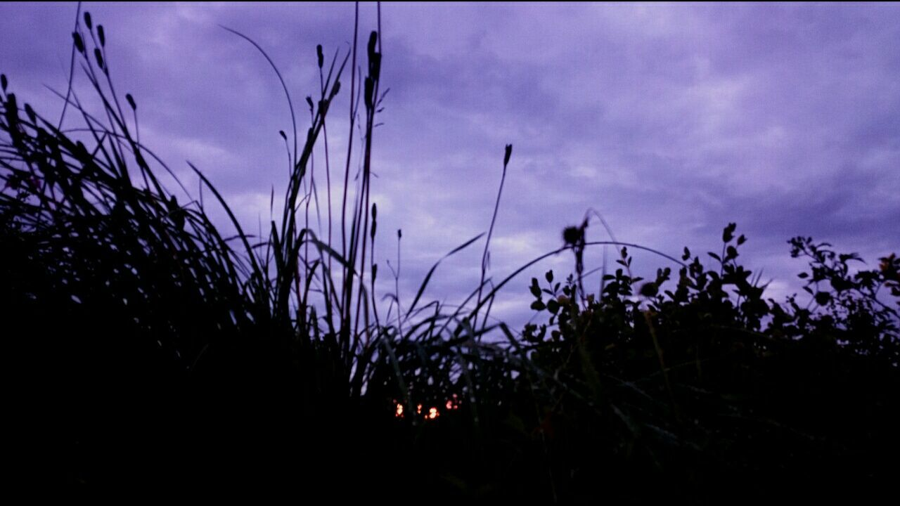 growth, plant, nature, sky, no people, silhouette, beauty in nature, outdoors, sunset, close-up, day