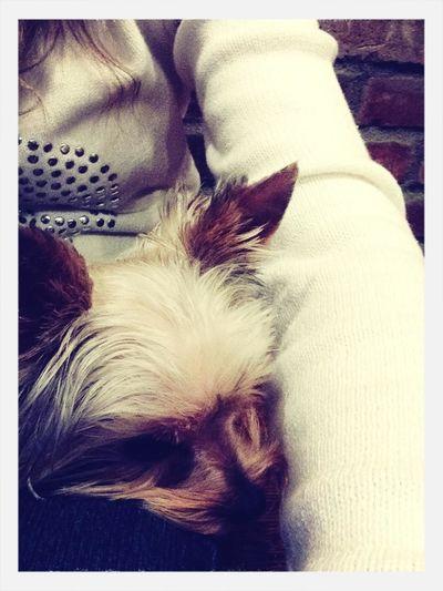 Morning puppy!