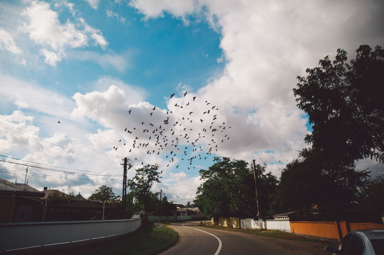Architecture Autumn Birds Cloud - Sky Clouds Day Flock Of Birds Nature No People Outdoors Road Road Sky Tree Twisting