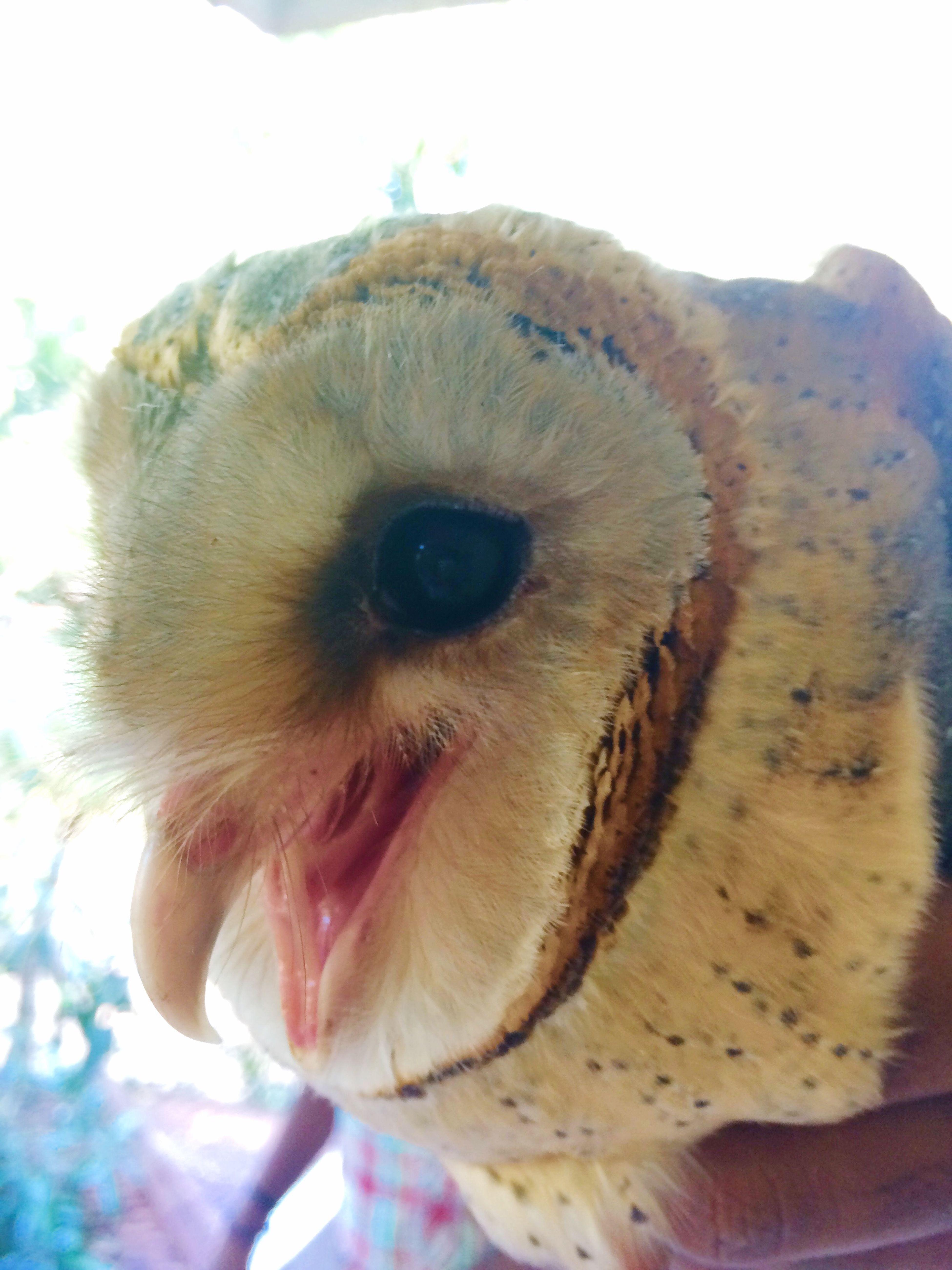 Vellimonga Owl Baby Cute