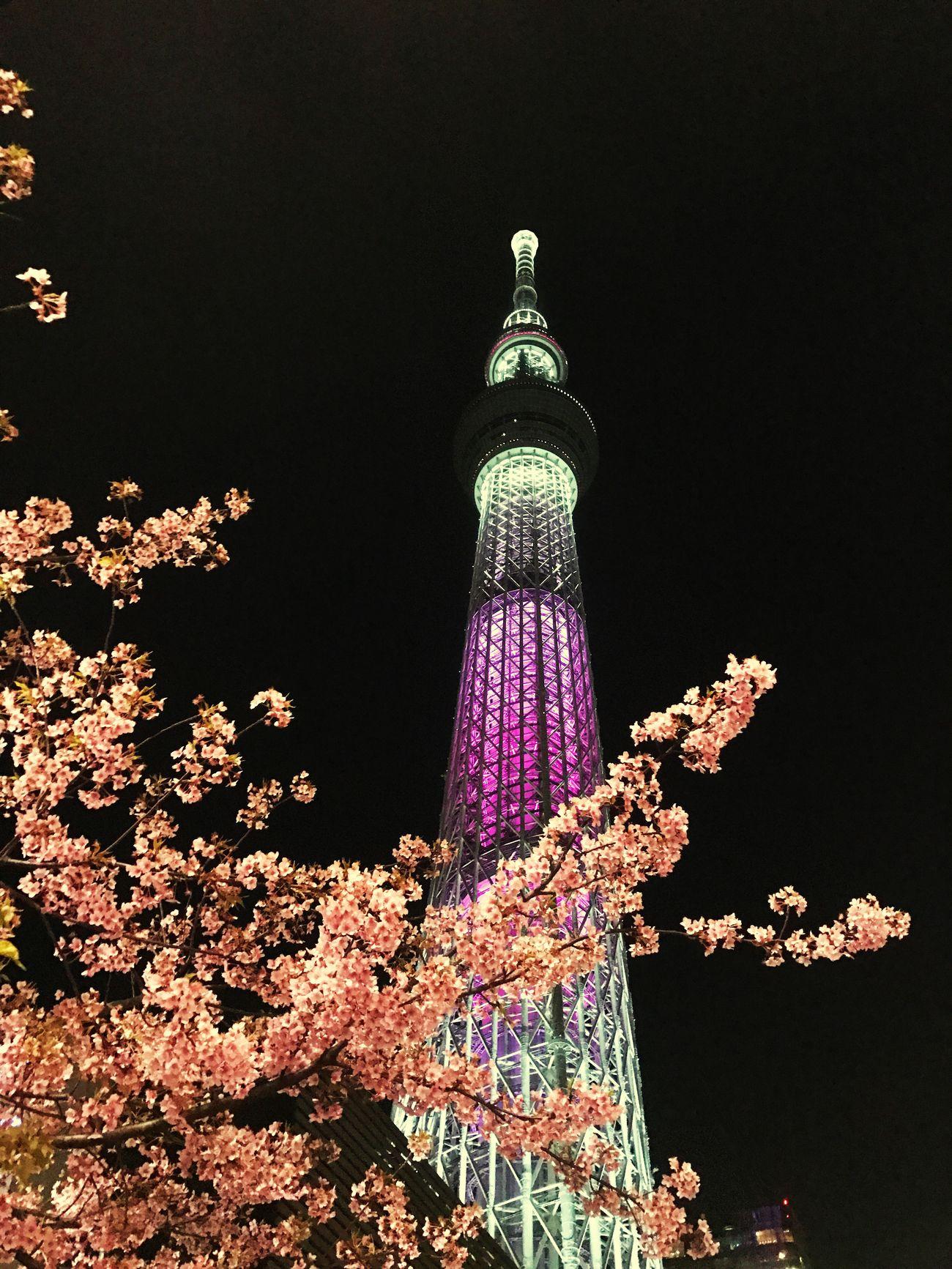東京 スカイツリー Night Sky 桜 Beauty In Nature