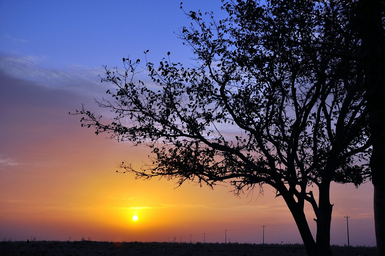 Iran Ghaen Hemmatabad Tree Sun Rising Sky Nature Picture Nikon #nikond90