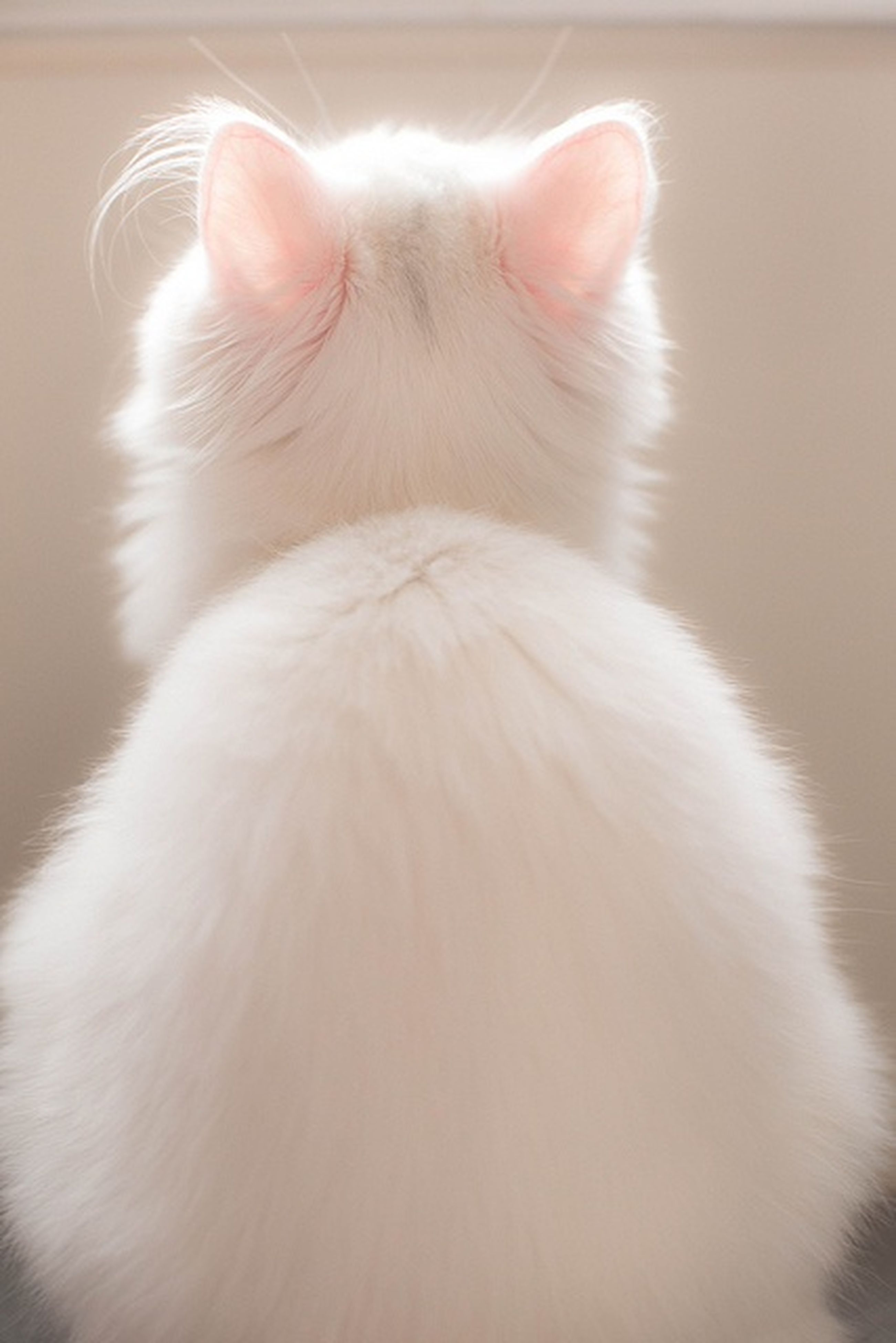 animal themes, one animal, domestic animals, pets, close-up, indoors, mammal, part of, domestic cat, animal head, white color, person, cat, whisker, animal body part, cropped, focus on foreground, feline, looking away