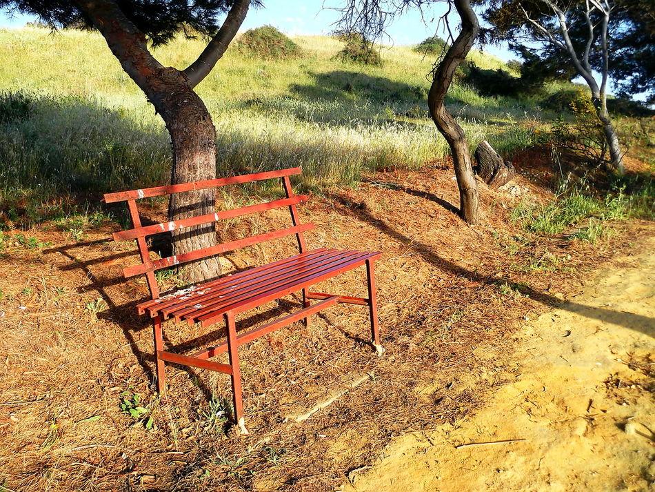 Agrigento Alberi Beauty In Nature Bench Campi Empty Natura Nature No People Outdoors Panchinavuota Sentiero Shadow Sicily Tramonto Tree Vegetazione