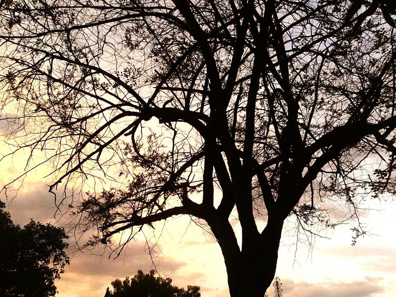 tree, branch, silhouette, beauty in nature, nature, tree trunk, bare tree, sunset, tranquil scene, sky, low angle view, tranquility, scenics, outdoors, no people, growth, day