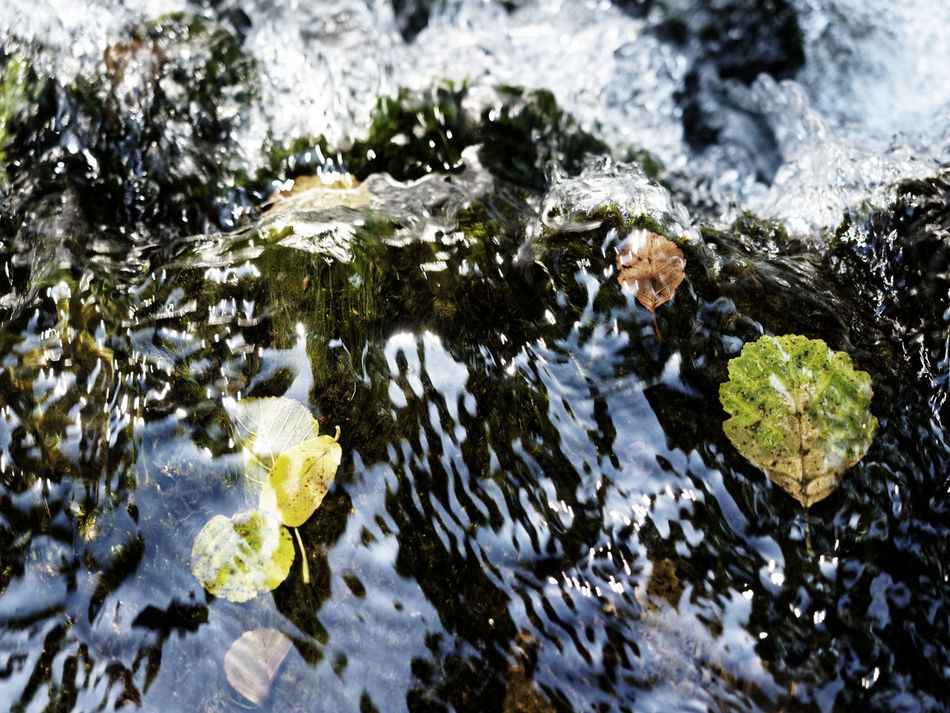 Leaves🌿 Nature Photography Beauty In Nature Close-up Day High Angle View Leaves Leaves On The Water Motion Nature Nature_collection No People Outdoors River Shallow Shallow Water Water Waterfall The Week On EyeEm