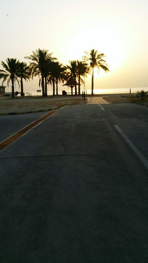 My Place Tree Sunset Palm Tree Outdoors No People Sky City Beach Heat - Temperature Day