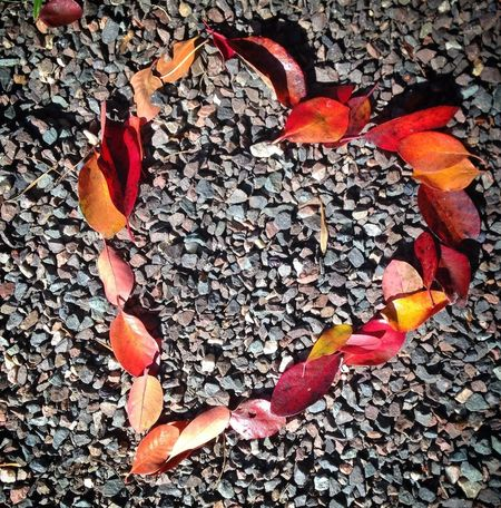 found 1/2 a heart.... completed it Colors Of Autumn EyeEm Best Shots The Purist (no Edit, No Filter) Autumn