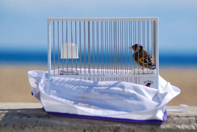 Jilguero On The Beach EyeEm Nature Lover Libertad Freedom