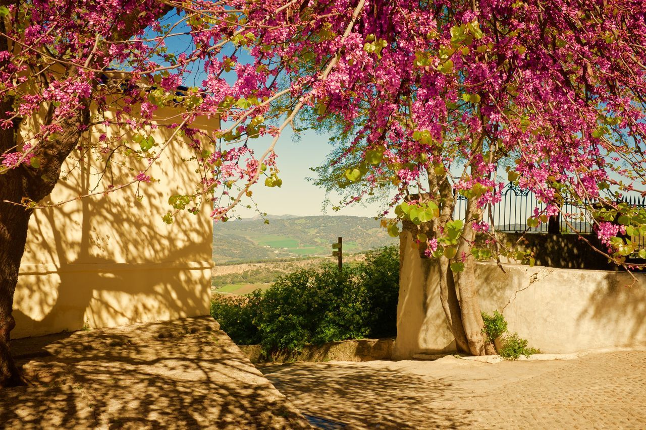 Springtime. Andalucia. Architecture Beauty In Nature Blossom Day Growth Nature No People Outdoors Ronda Spain Scenics Sky Sunlight Tranquil Scene Tranquility Travel Destinations Tree Tropical Climate Vacations