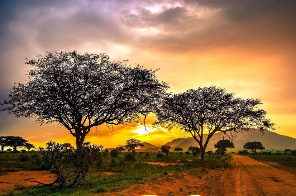 African sunset Tree Sunset Sky Landscape EyeEm Best Shots EyeEm Nature Lover Nature Beauty In Nature Tranquility Kenya Africa Nature_collection Nature Photography Sunset_collection No People Field Tranquil Scene Outdoors Cloud - Sky Scenics Bare Tree Lone Day