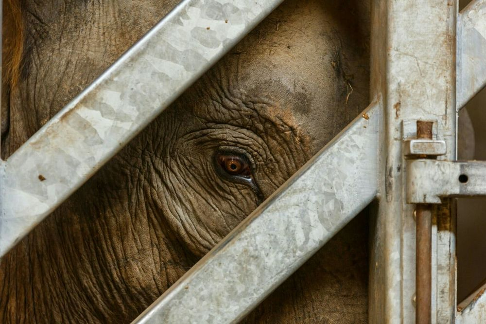 Animals Elephant Caged Close Up Canon EOS 5D MarkIII Sigma 70-200mm Lightroom Cc Lightroom Mobile Twycross Zoo