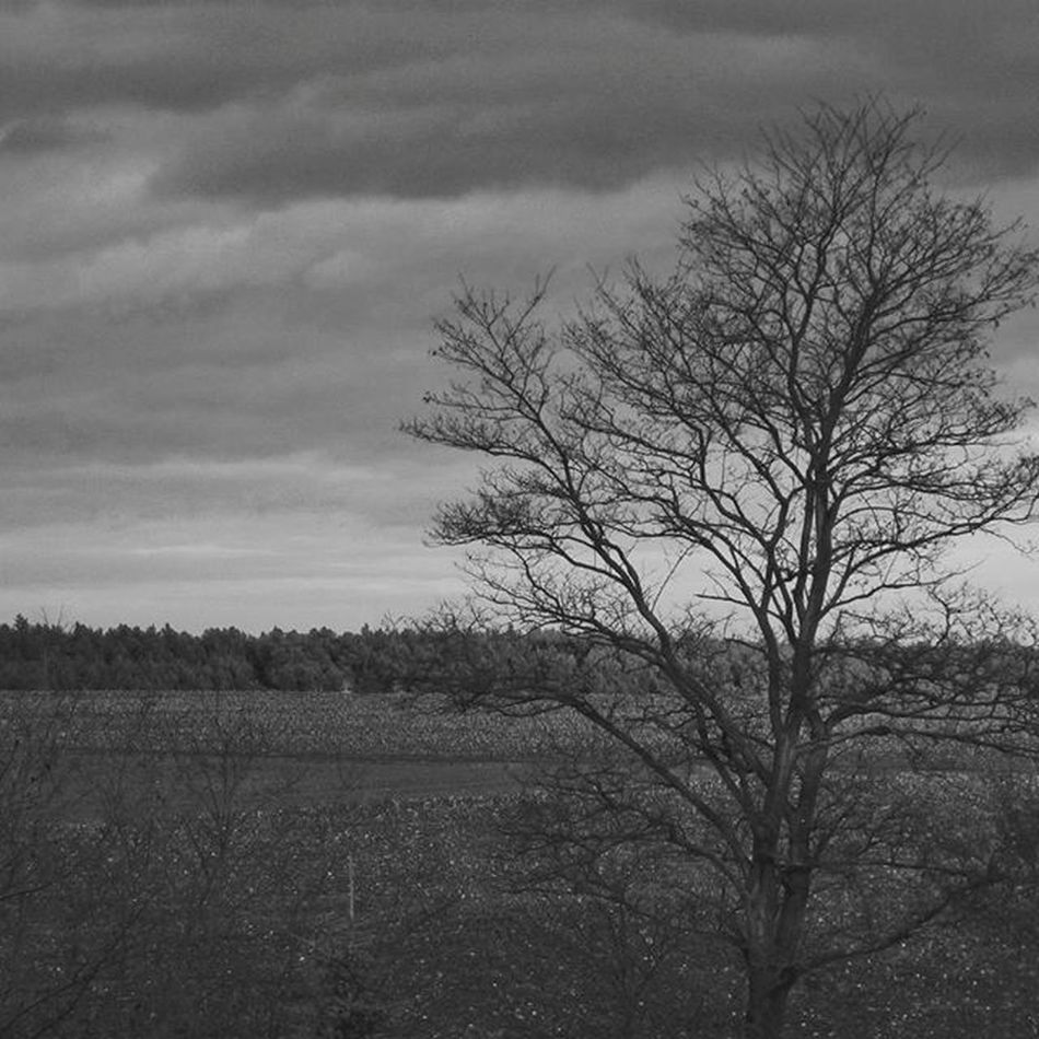 Lonely Tree... Match_bw Ayad_bnw Best_bnw_archive Ig_captures Ig_europe Ig_poland Bnw_captures Like4like Bnw_life Likeforlike Nature Naturelovers Bw_lover