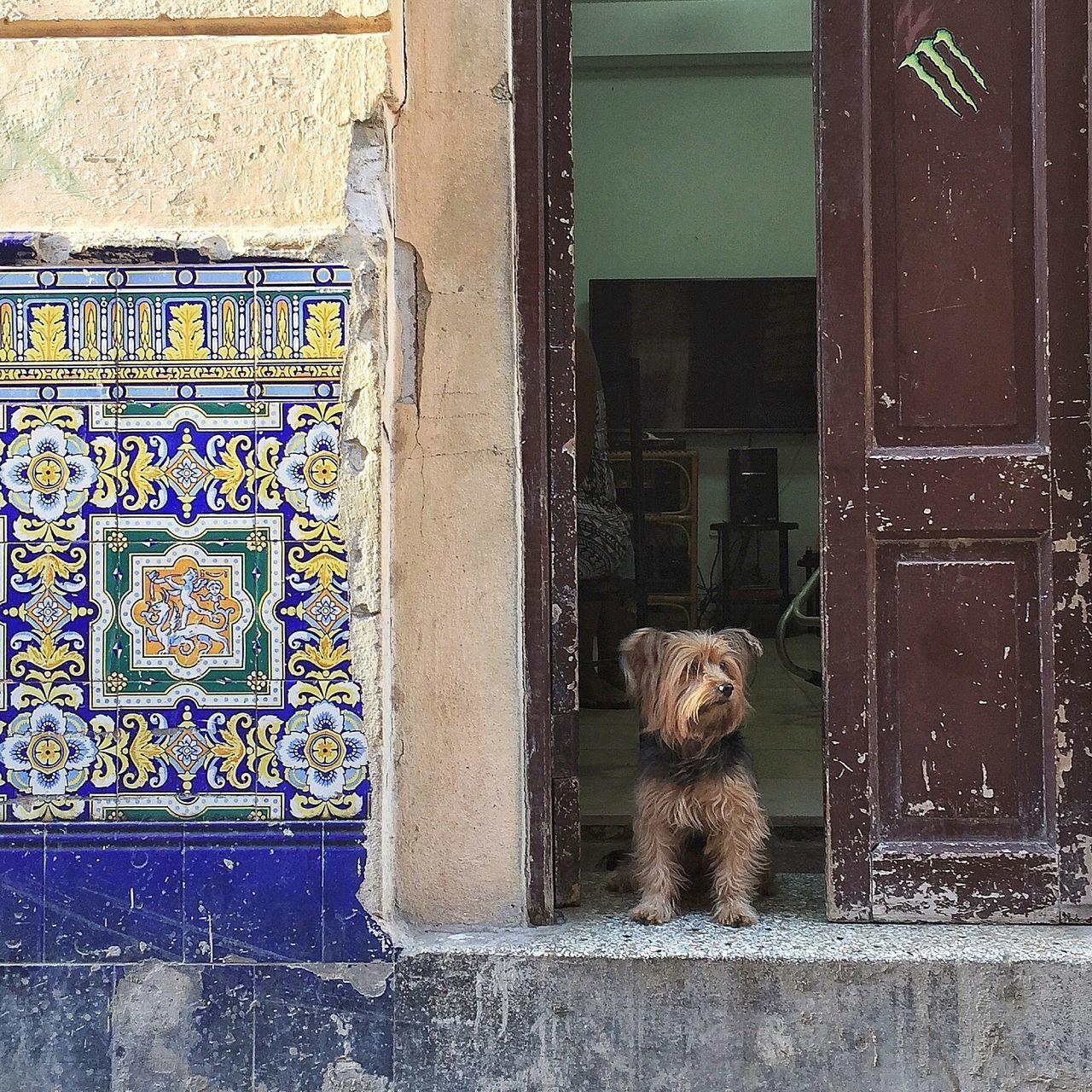Beautiful stock photos of cuba, Apartment, Dog, Doorway, House