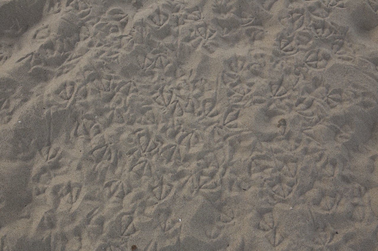 Beach Beachphotography Birds Island Nature Photography Sand Traces Traces In The Sand