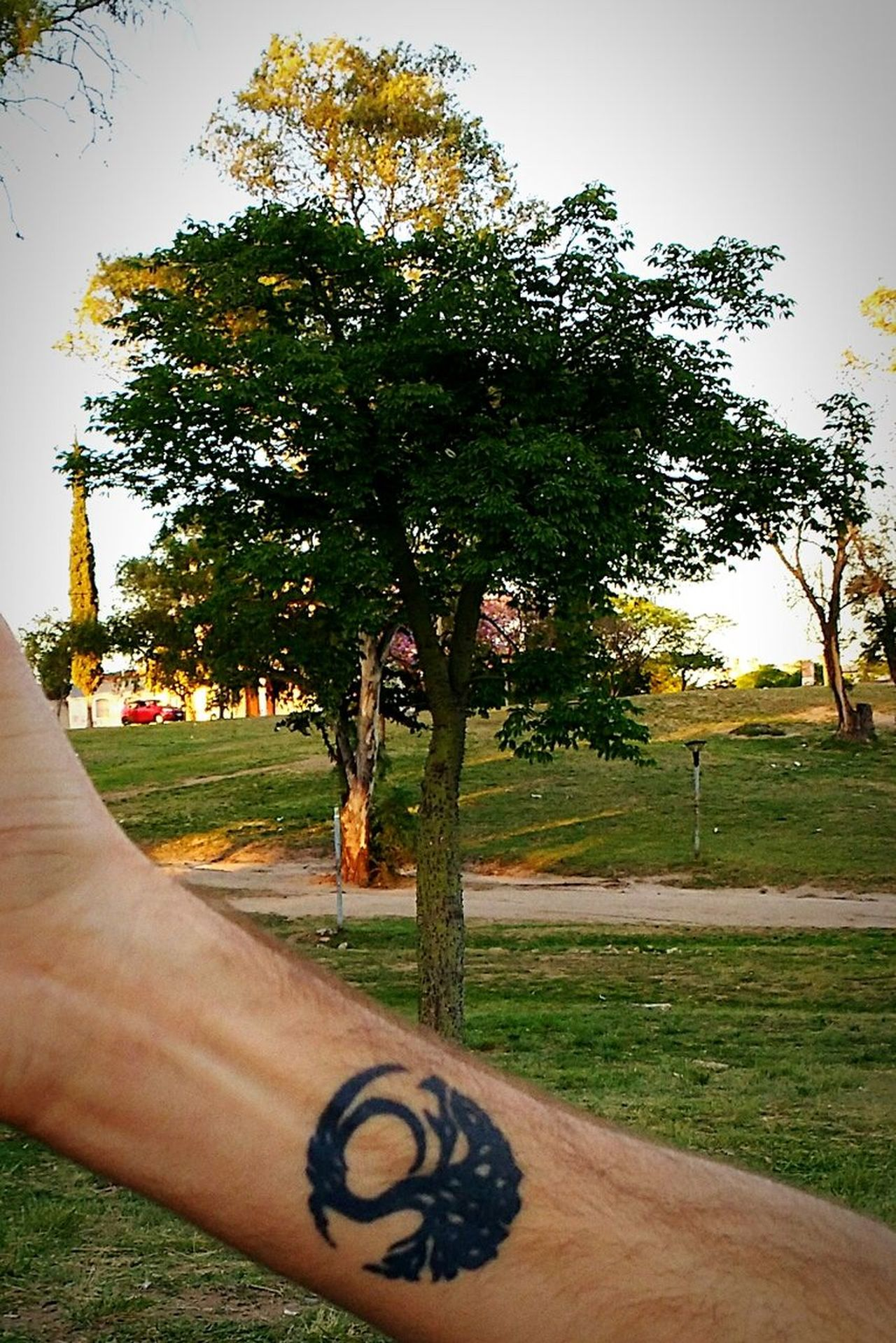 Tattoo Tree Lifetree Tatuaje árbol Arbol De La Vida ArbreDeVie Amanecer