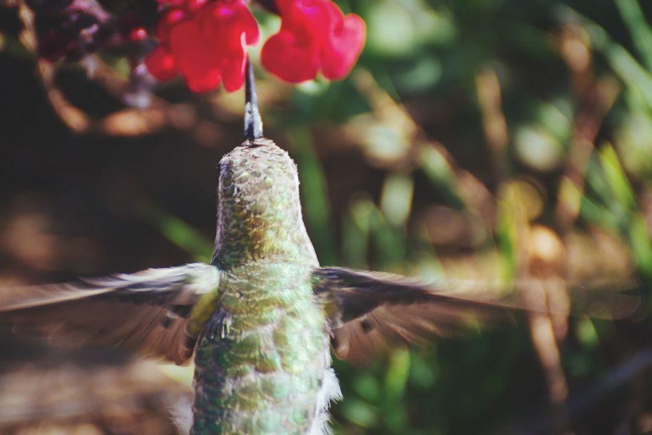 Beautiful stock photos of hummingbird, Animal Themes, Animals In The Wild, Beauty In Nature, Bird