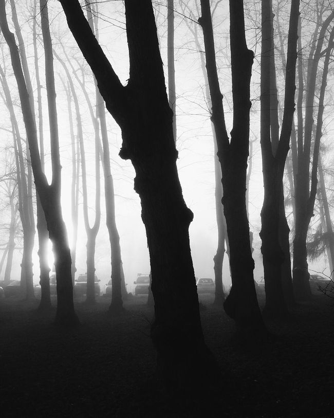 Standing tall Atmospheric Mood Blackandwhite Photography Blackandwhite Blancoynegro Norway EyeEm Nature Lover Landscape_Collection Trees Nature_collection Naturelovers